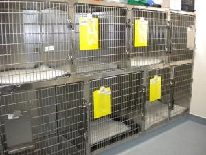 bts-dog-kennels
